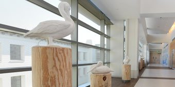 Healing Art & Decor - Pelican Hallway