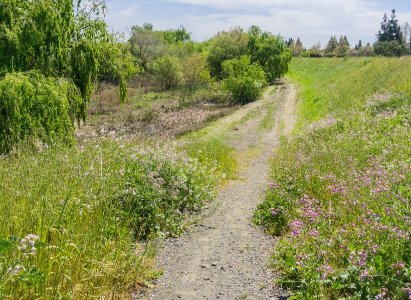 A trail leading through tall weeds and flowers